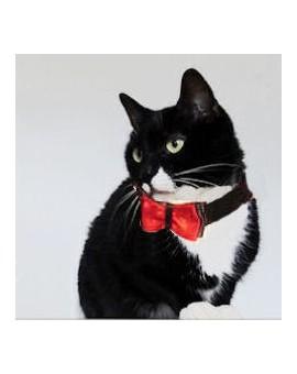 Noed papillon rouge pour chat